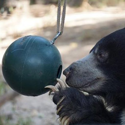A large brown bear playing with a special zoo animal toy ball