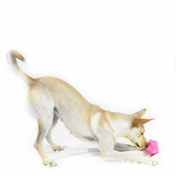 Dog sniffing pink monster treat ball