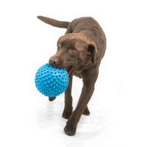 dog ball pop proof