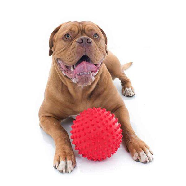 mitch ball dog ball pop proof