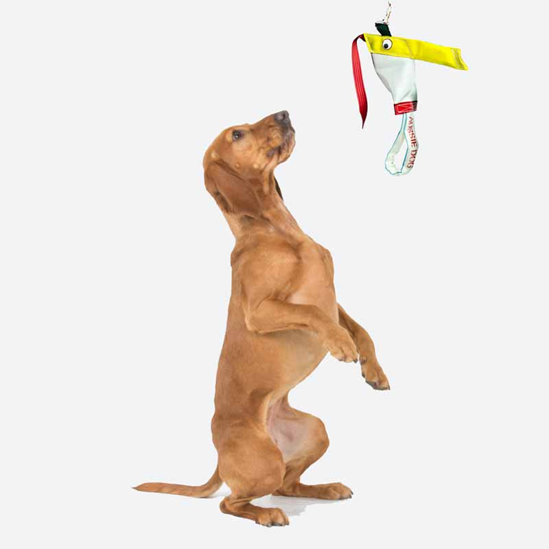 Dog sitting up to play with the standard Bungee Chook dog toy