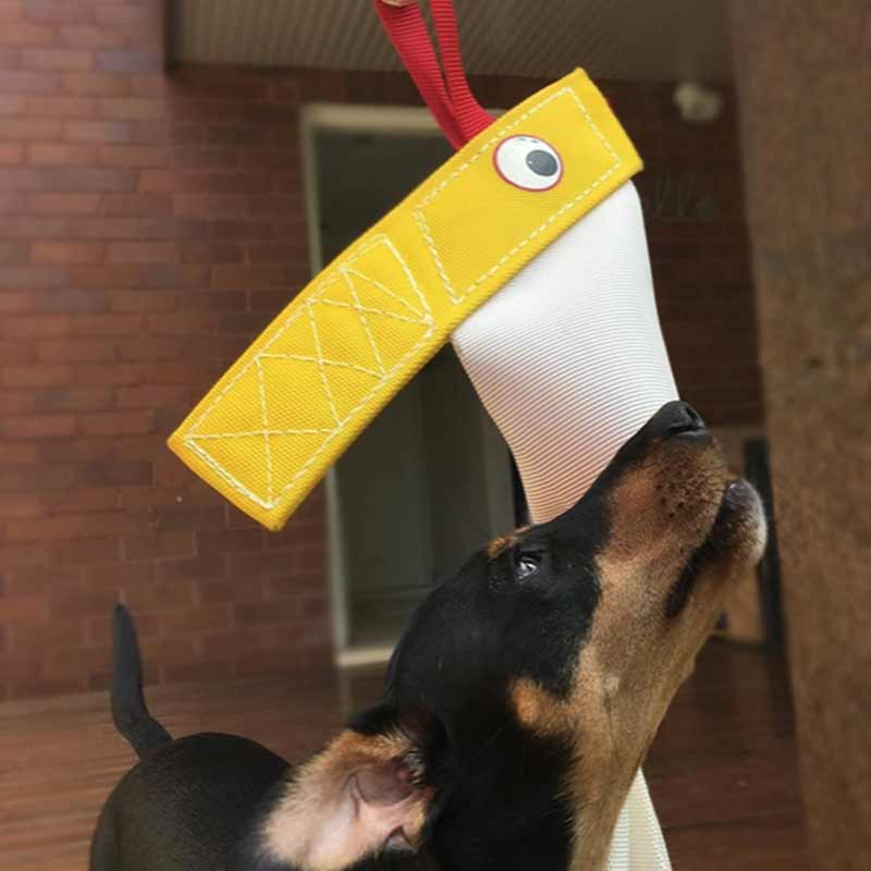 Kelpie X with bungee chook dog toy