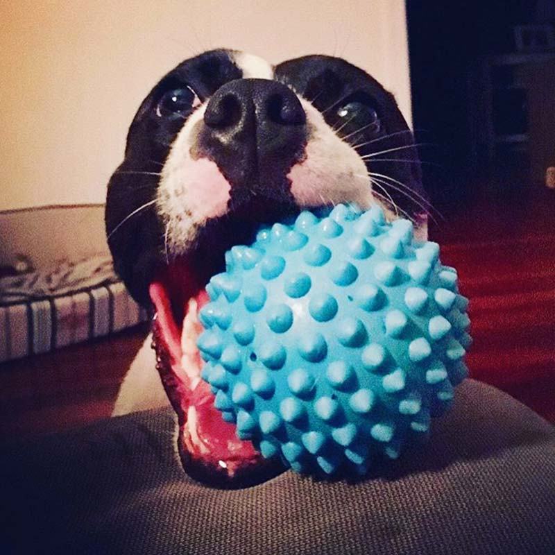 Dog chewing tough blue Catch Ball