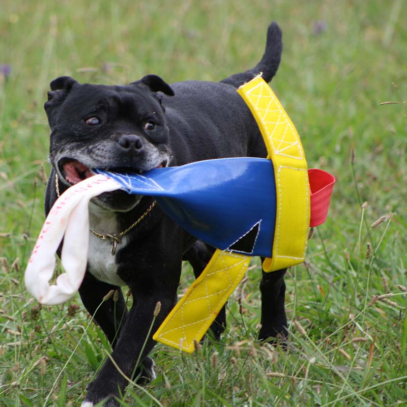 Staffy with our Chook Heavy Duty dog toy