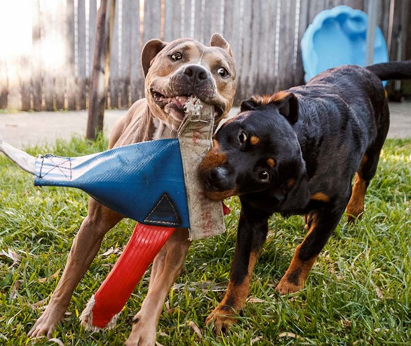 Playtime safety for dogs