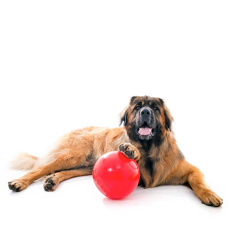 Large dog and large Enduro Ball dog toy