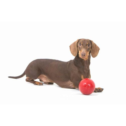 Dachshund and small red enduro ball