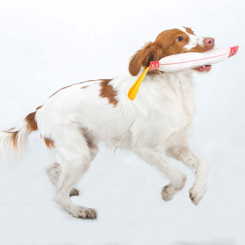 Cocker Spaniel with a Fetch-it for small dogs