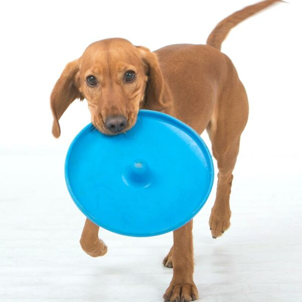 Puppy with blue frisbee in its mouth