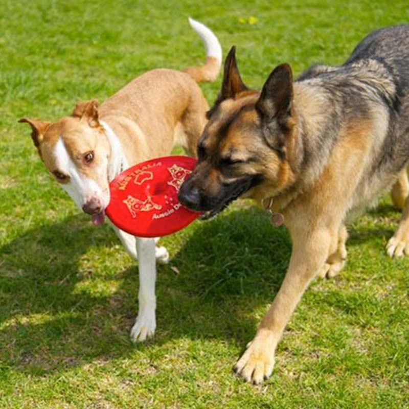 German Sheperd and another dog with a frisbee