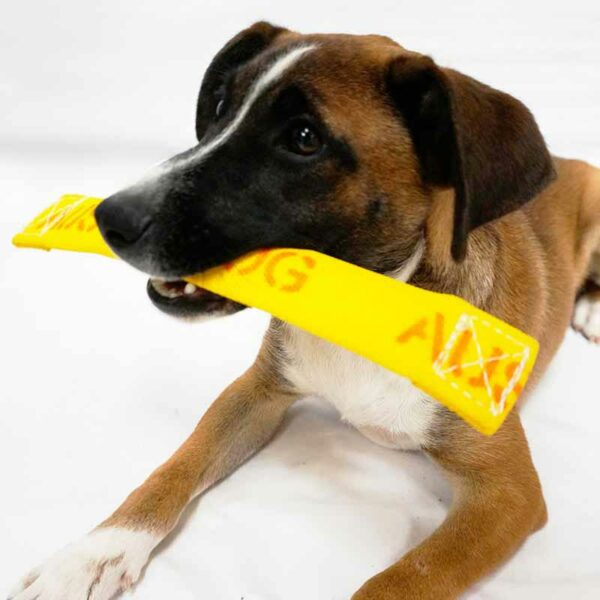 Puppy chewing the get-it toy for small dogs