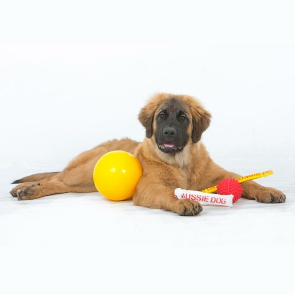 Puppy yellow and red balls and tug toys