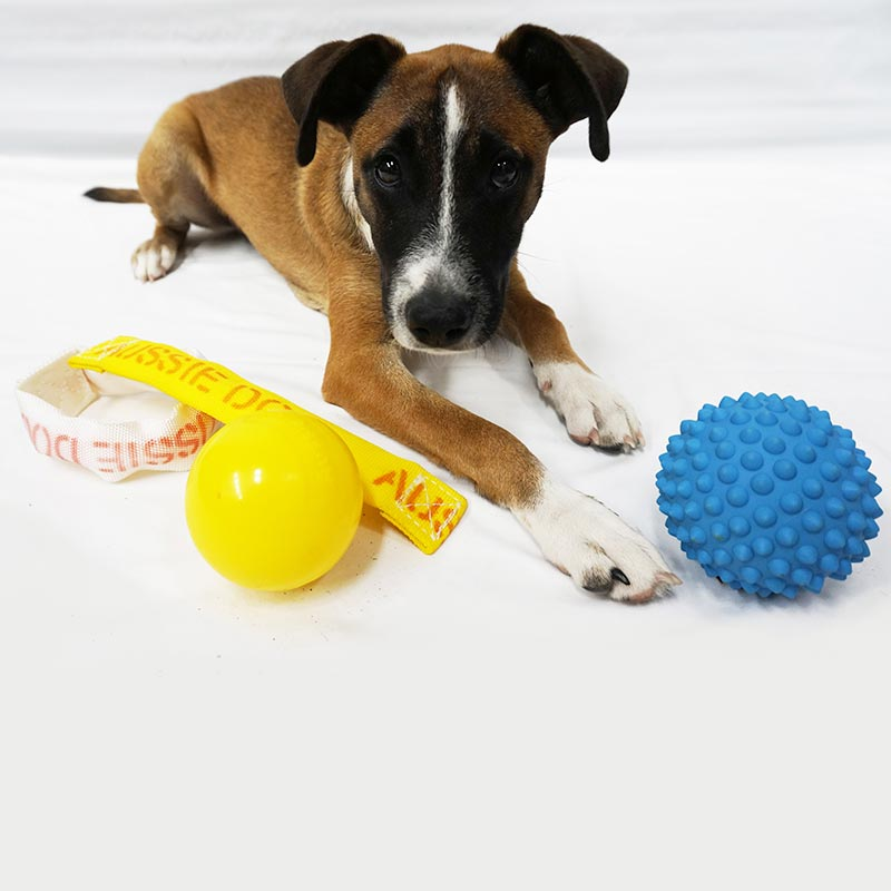 Puppy with yellow and blue catch balls and chew toy
