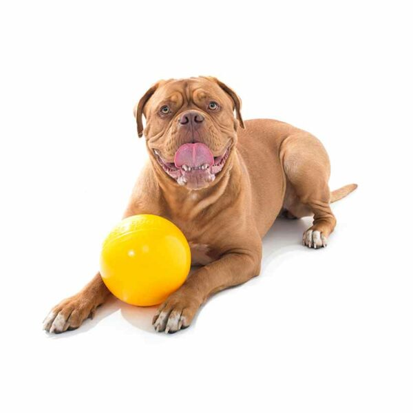 Large dog with medium yellow tucker ball for kibble