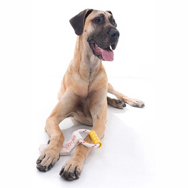 Large dog with a Tug-It dog toy
