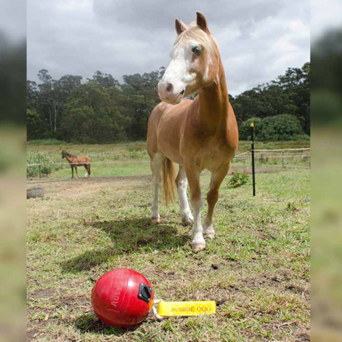 Jiggy horse ball for chalf and interactive play