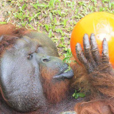 Primates & Monkeys