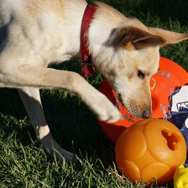 Dog playing with Buddy Ball Large