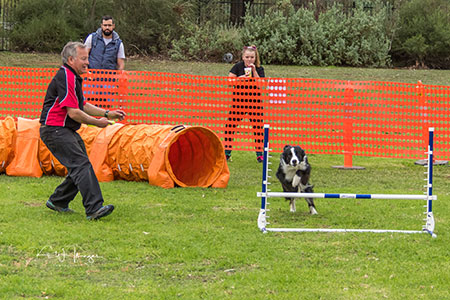 Updog Challenge Border Collie before jump