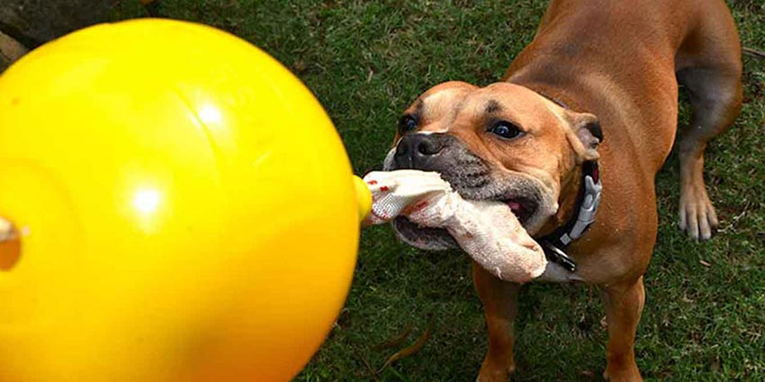 Top 5 ways a toy can stimulate the senses of a bored dog