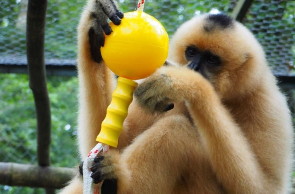 EPRC Vietnam gets Aussie Dog primate enrichment toys